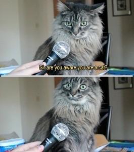 self aware cat