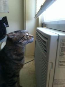cat & AC