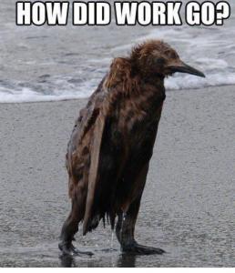 work bird