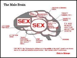 male-brain